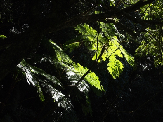 ferns_and_light
